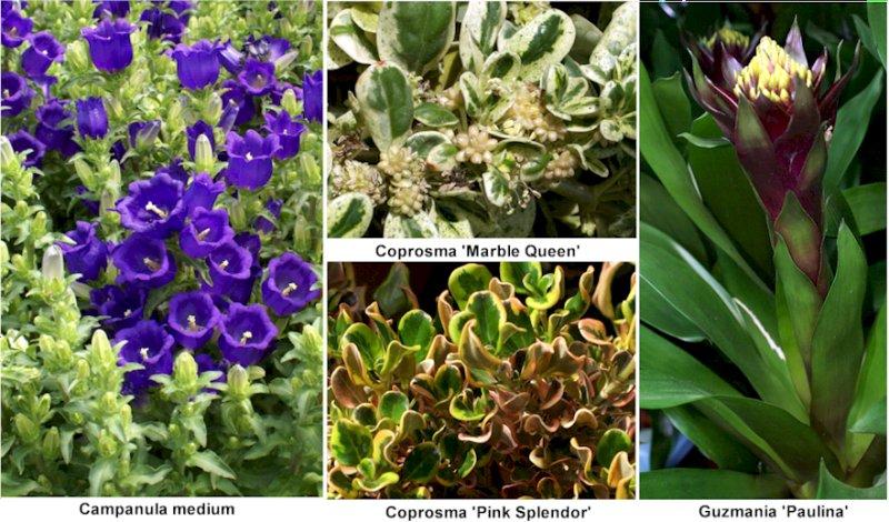 Fotos De 22 Plantas Ornamentales De Viveros Murcia Con Sus Nombres