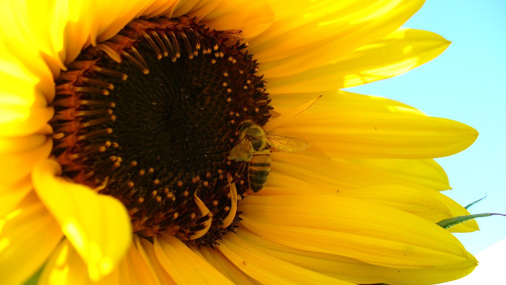 Jardiner a y patios de m xico fotos de plantas p gina 20 for Paginas de jardineria
