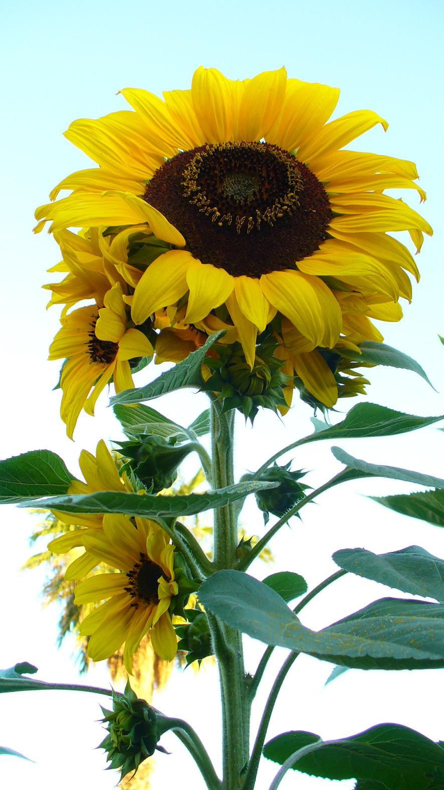 Jardiner a y patios de m xico fotos de plantas p gina 20 for Jardineria y plantas