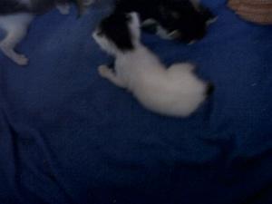 3 gatitos en Mallorca Bfi1335455092r