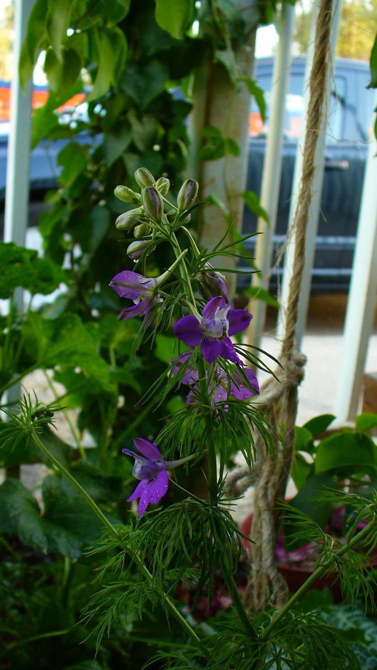 Jardiner a y patios de m xico fotos de plantas p gina 5 for Jardineria y plantas