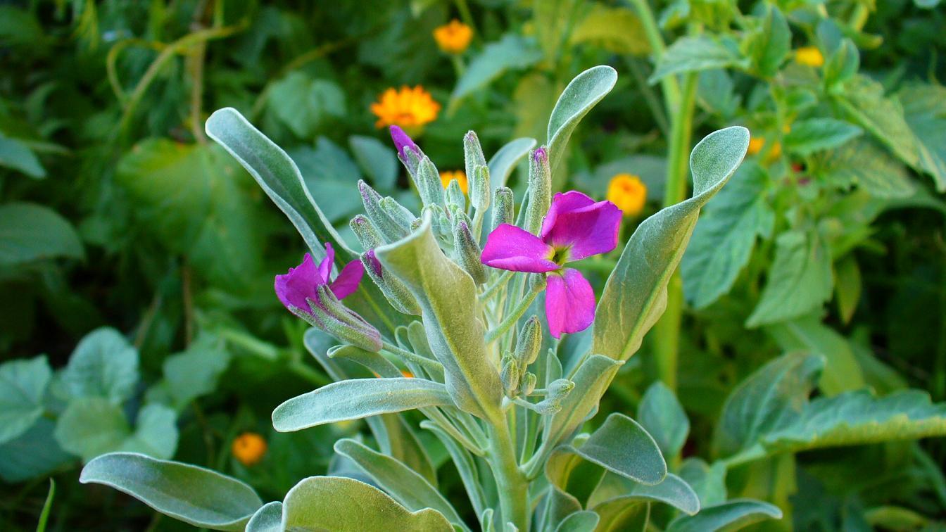 Jardiner a y patios de m xico fotos de plantas p gina 11 for Jardineria y plantas