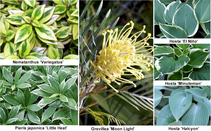 Fotos de 22 plantas ornamentales de viveros murcia con sus for Viveros y plantas