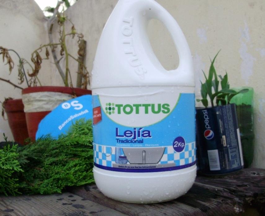 Cipr s goldcrest plantar esquejes p gina 2 - Lejia para los hongos ...