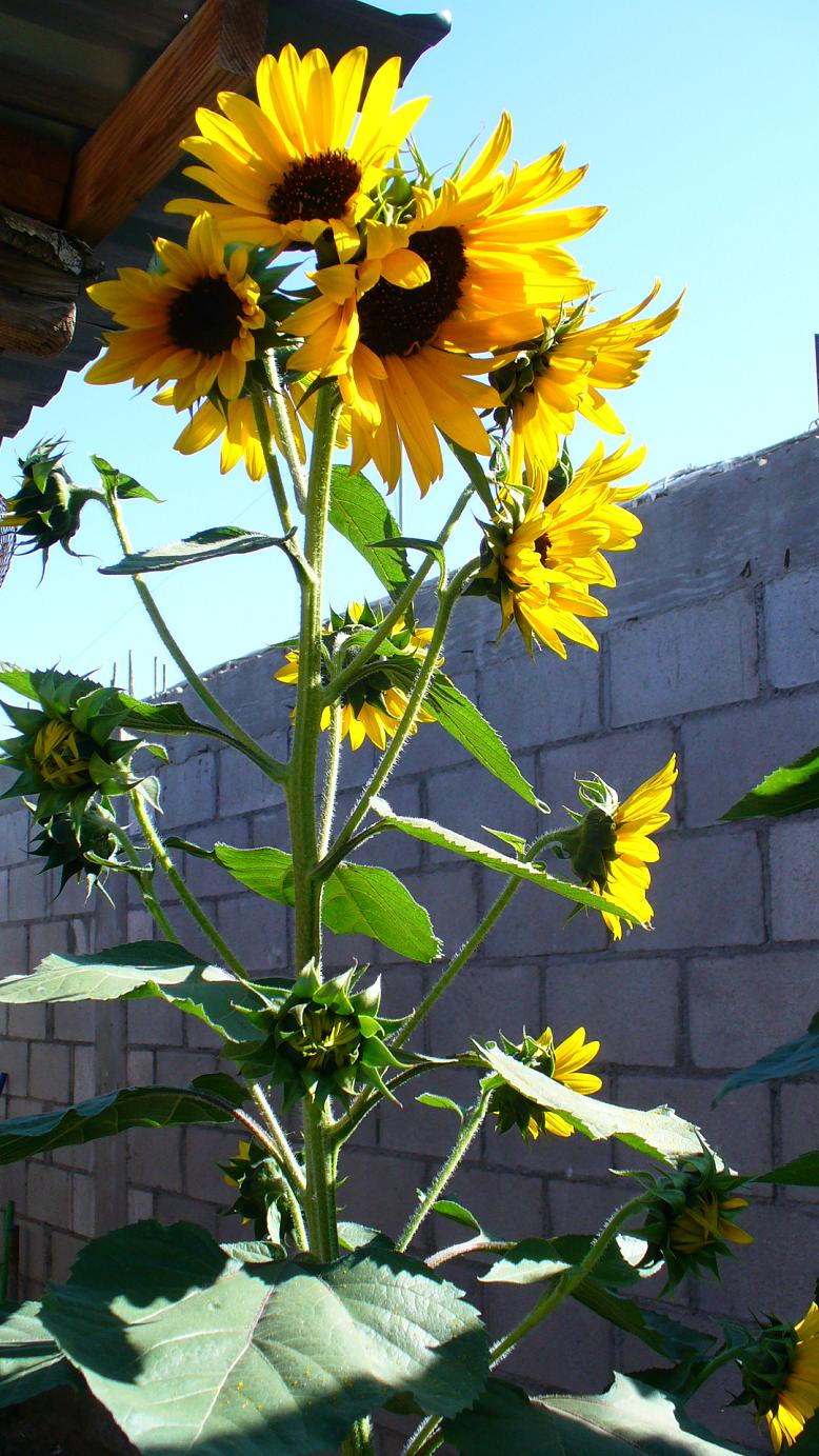 Jardiner a y patios de m xico fotos de plantas p gina 23 for Paginas de jardineria