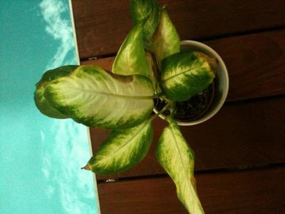 Plantas De Interior Resistente A Altas Temperaturas Para Habitacion