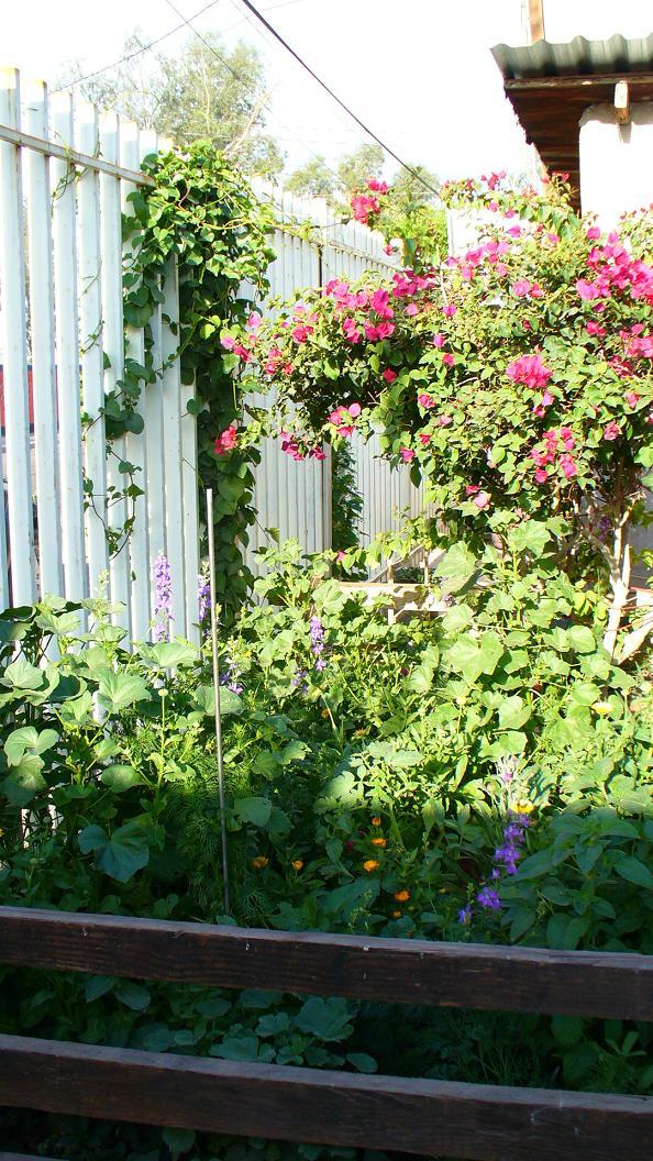 Jardiner a y patios de m xico fotos de plantas p gina 11 for Paginas de jardineria