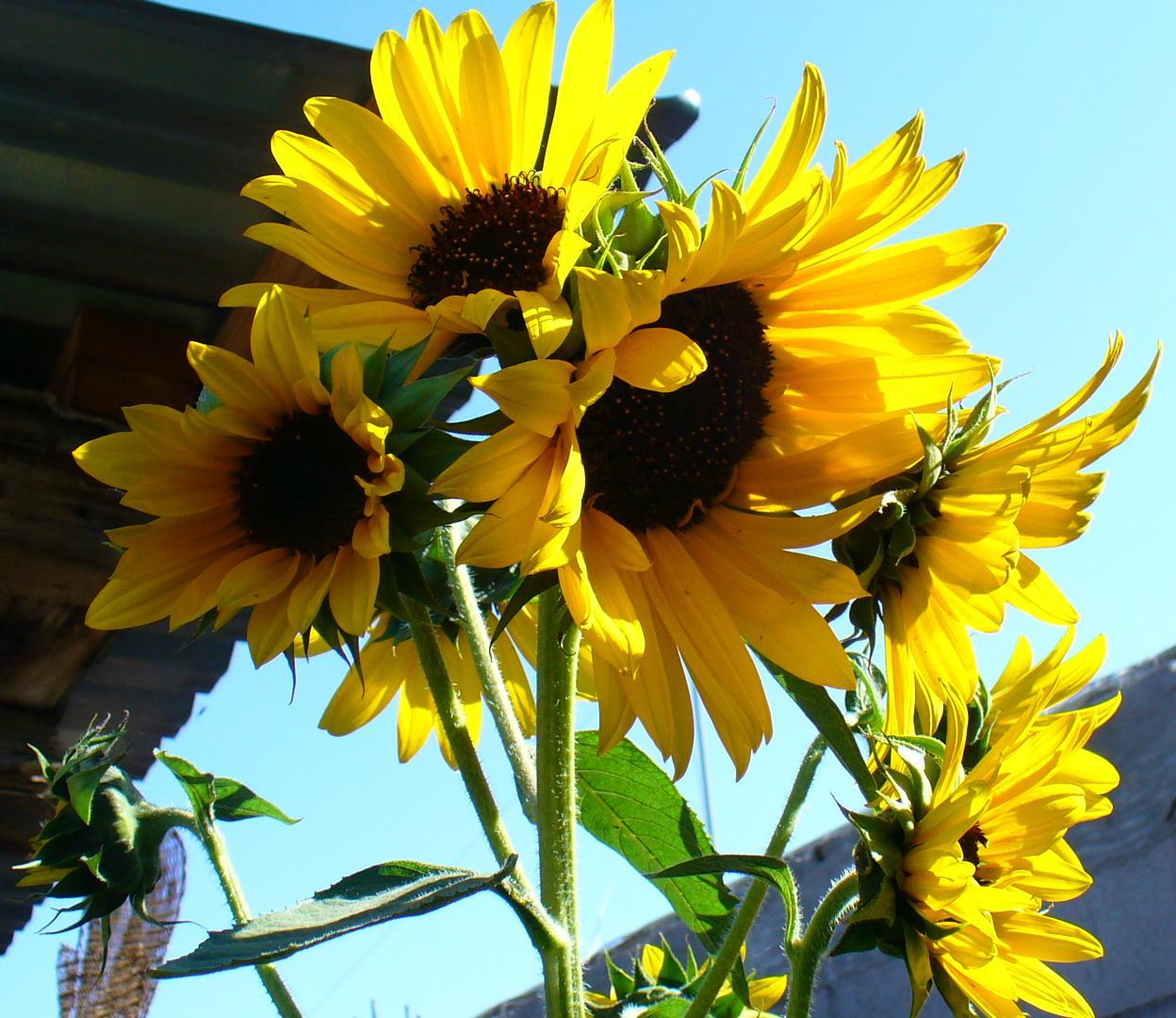 Jardiner a y patios de m xico fotos de plantas p gina 23 for Jardineria y plantas