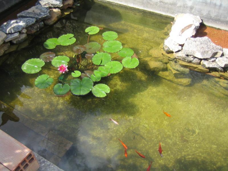 Crear un estanque artificial sin lona con arcilla fotos for Como hacer una laguna artificial para peces