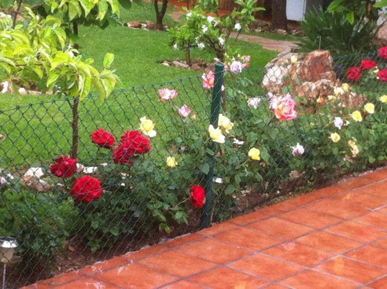 Riego autom tico en jard n con rboles en medio c mo for Riego automatico jardin