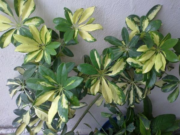 Jardiner a y patios de m xico fotos de plantas p gina 31 for Jardineria y plantas