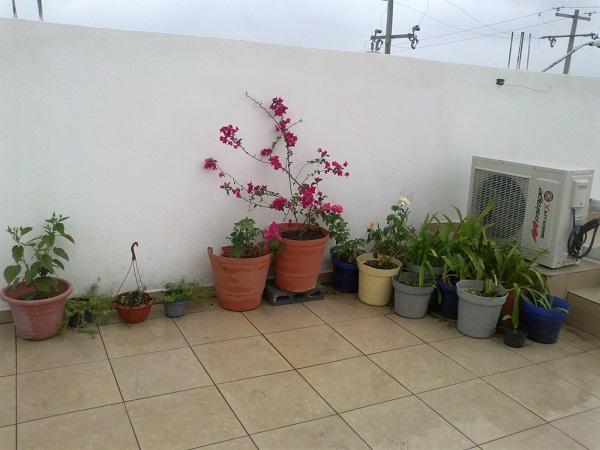 Jardiner a y patios de m xico fotos de plantas p gina 31 for Jardineria queretaro