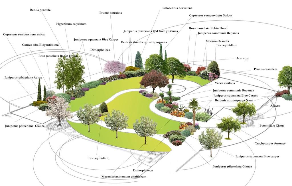 Organizar mi jard n p gina 14 for Arbustos de jardin nombres