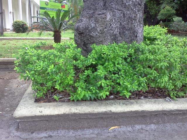 Saber el nombre de este arbusto - Lista nombre arbustos ...