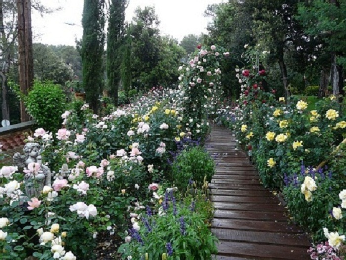 Un jardin de rosas imagui for Cancion jardin de rosas