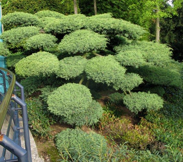 El jard n de nunca acabar intercambio de experiencias y for Capillas de velacion jardin de los pinos