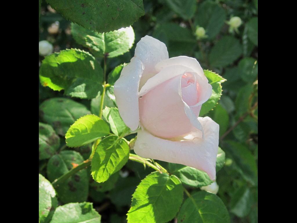 Fotos de rosales junto a santander - Matices santander ...