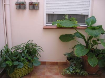 Mi patio en la mancha - Luces para plantas de interior ...