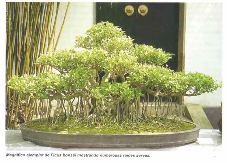 Foro de infojard n - Libros de bonsais ...