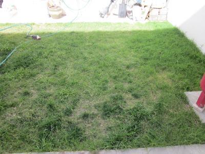 Hongos o mala hierba en el c sped de mi jard n fotograf as for Hongos en el cesped jardin