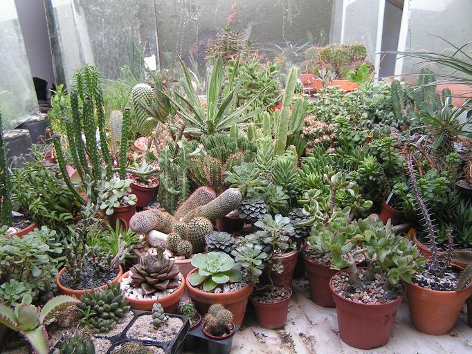 La casa de las suculentiisimas p gina 3 - Plantas para terraza con mucho sol ...