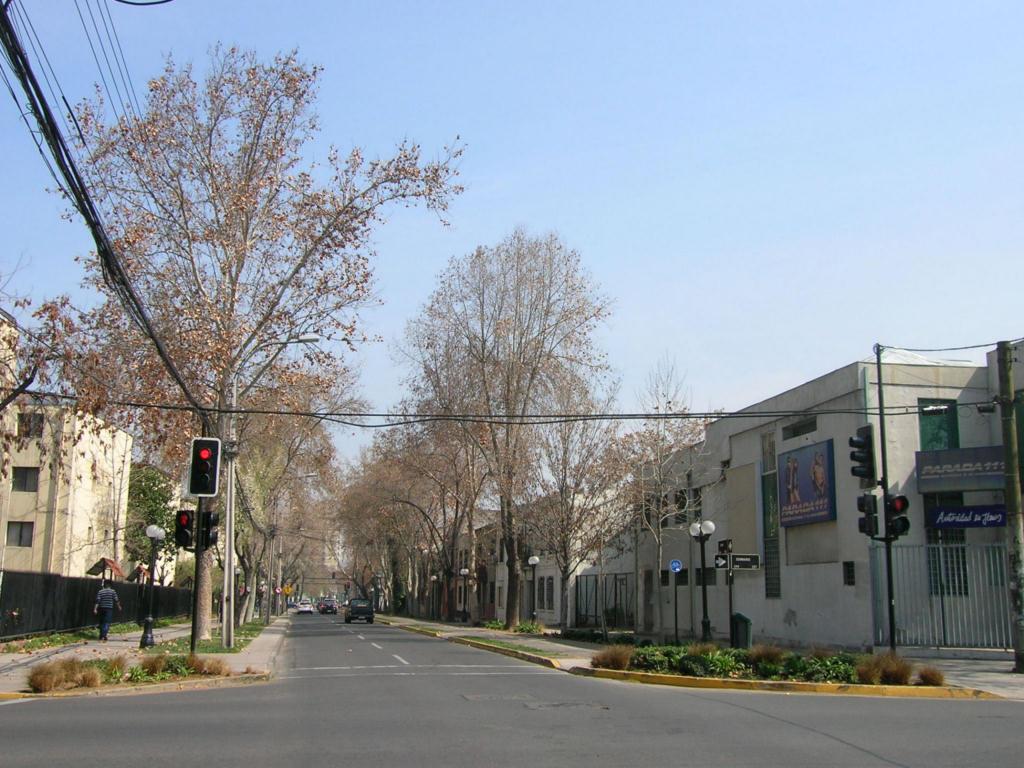 Rboles de las calles de santiago de chile for Calles de santiago de chile