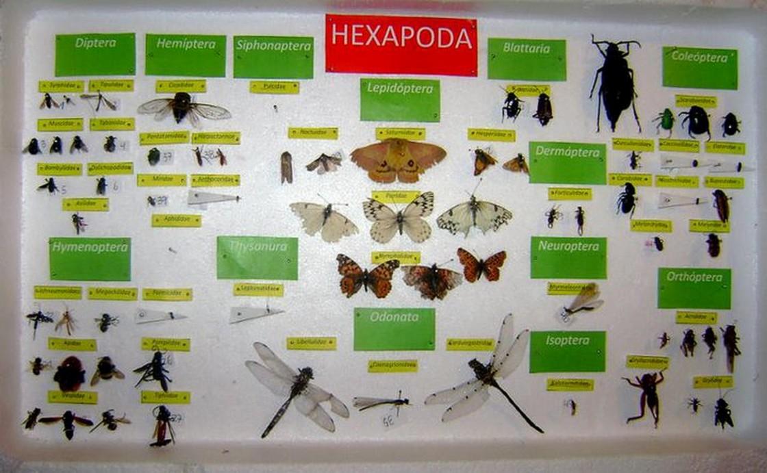 Macrofotograf a de semillas flores e insectos en la - Cazar ratones en casa ...