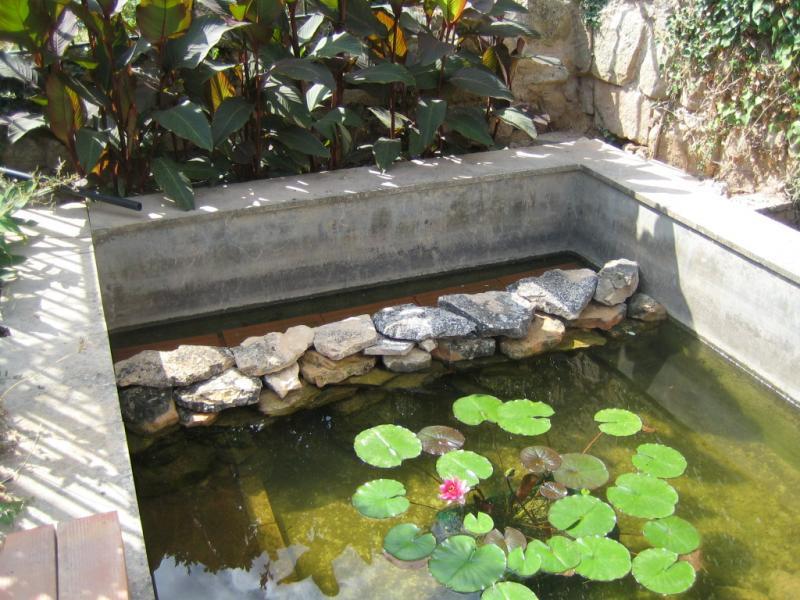 Fotos de estanque en lleida antes era una balsa de riego for Como construir un lago para peces