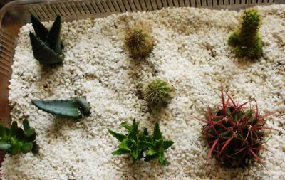 Piedras para cactus - Jardines con cactus y piedras ...