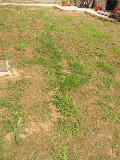 Plantar c sped o dejar la hierba aut ctona en terreno de 2 - Cuando plantar cesped ...