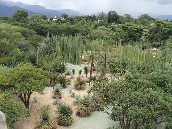 Jard n etnobotanico oaxaca m xico for Jardin oaxaca