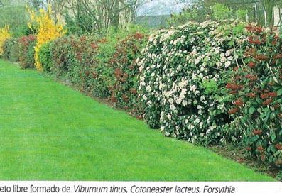 Setos para ocultaci n de valla poca adecuada para for Estudiar jardineria