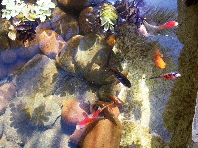 Pintura impermeabilizante aptas para estanques for Pintura para estanques