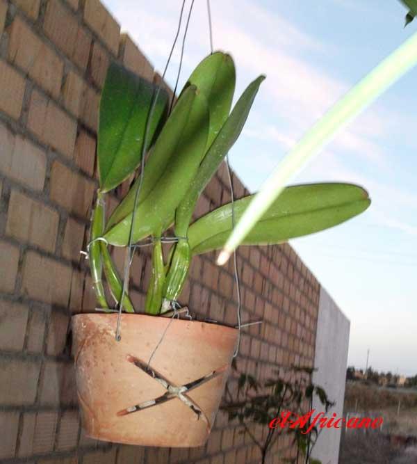 Tunenado tiestos de barro para orqu deas p gina 2 - Tiestos para orquideas ...
