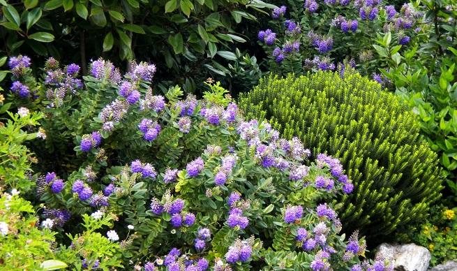 Organizar mi jard n p gina 4 for Arbustos ornamentales para jardin