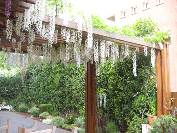 1000 ideas about p rgolas cenadores y porches sombra for Cenadores de jardin