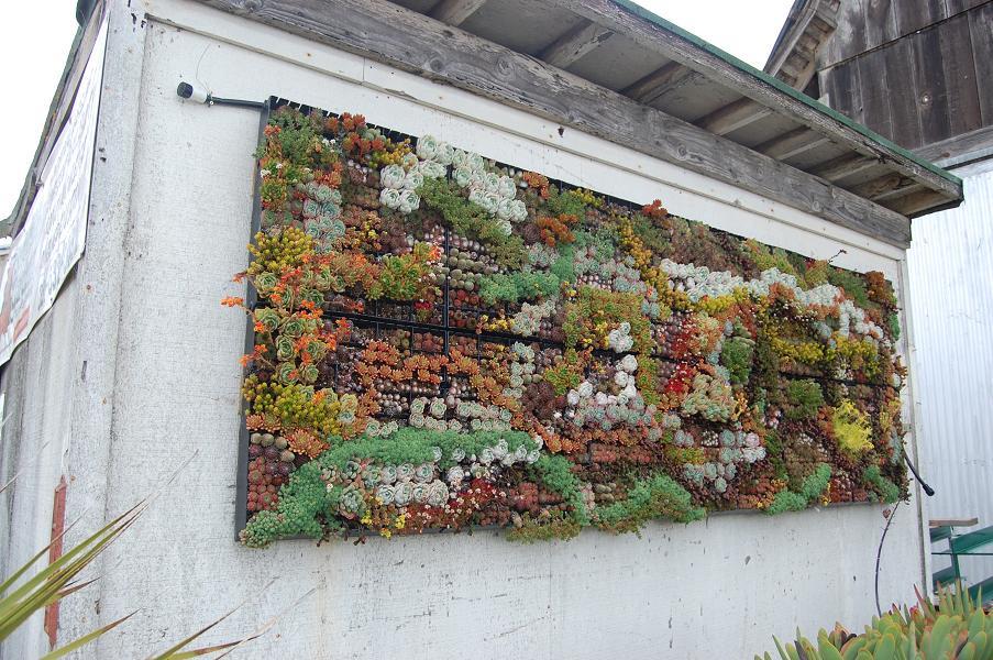 Jardines verticales trabajos hechos por foreros de for Infos jardin