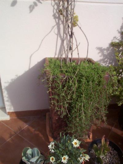 Recomendaci n de plantas para jardineras exteriores - Plantas para jardineras exteriores ...