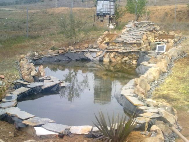 Fotos de mi nuevo estanque recibir consejos y cr ticas for Fotos de estanques