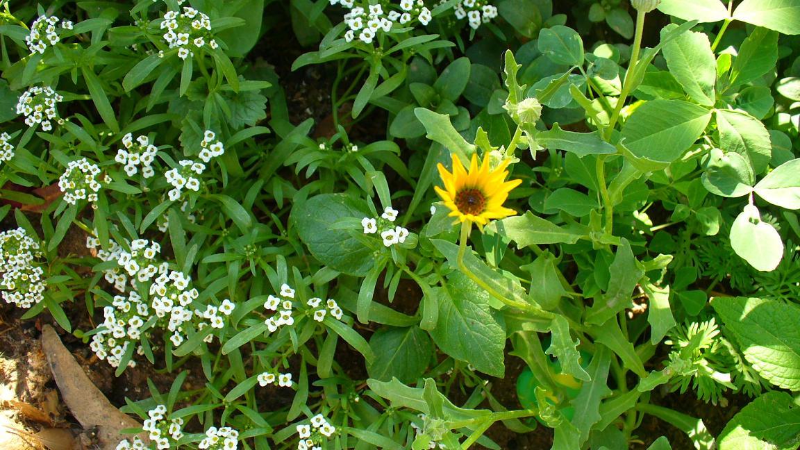 Jardiner a plantas y patios de m xico p gina 170 for Jardineria y plantas