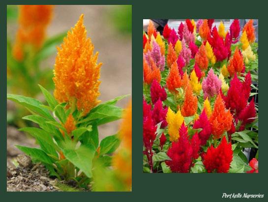 Plantas que aguantan mucho sol amazing apuntes sobre - Plantas que aguanten el sol ...