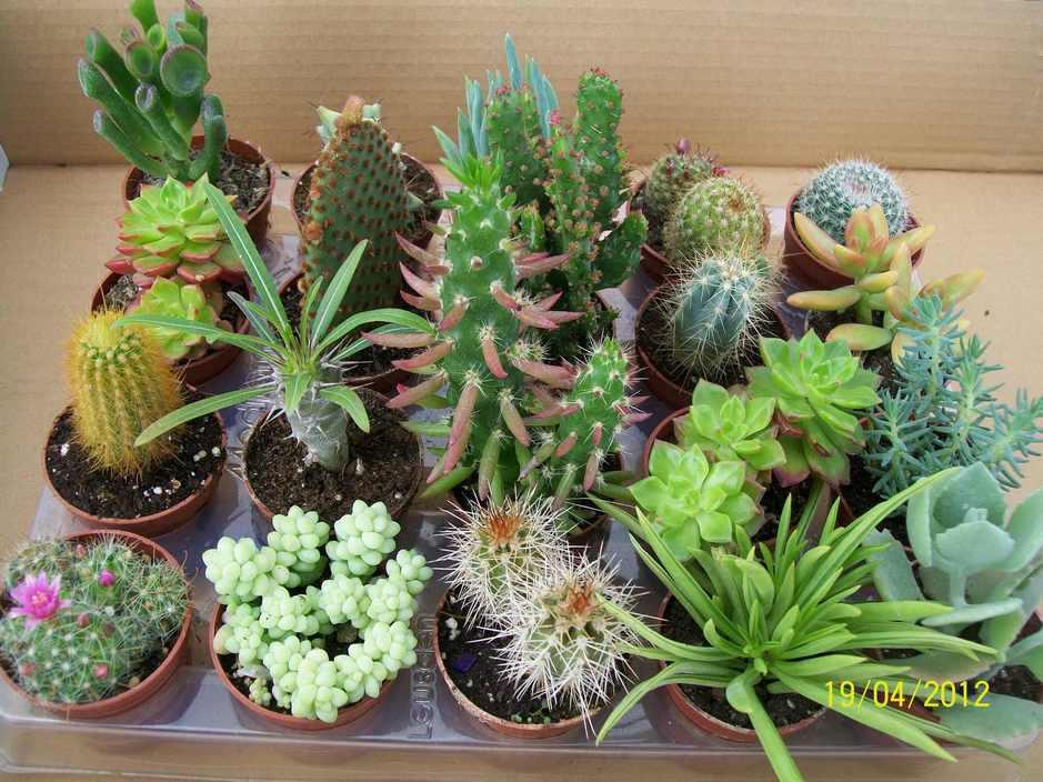 Plantas+Ornamentales+De+Sol Unos cuantos Cactus y otro tipo de plantas