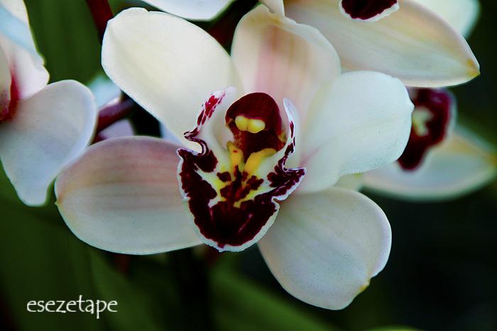 Jardiner a im genes de nuestras plantas aves y dem s for Paginas de jardineria