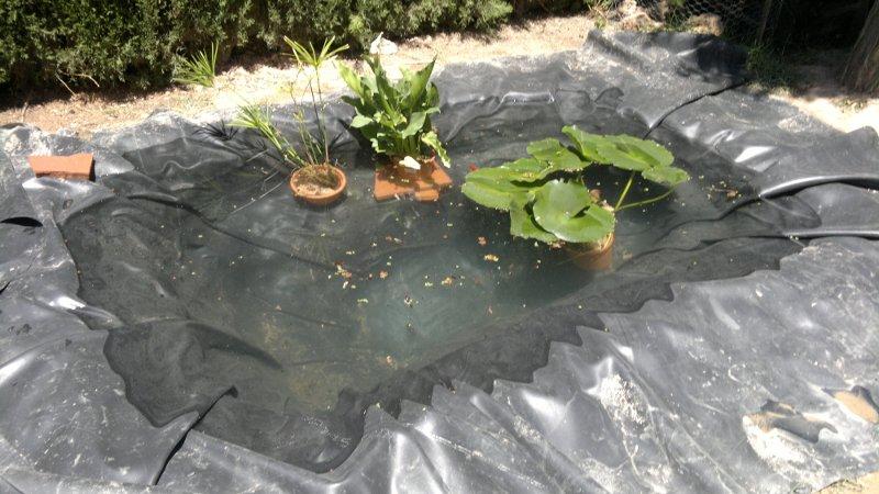 Estanque en construcci n profundidad pl stico para el for Estanques de plastico para tortugas