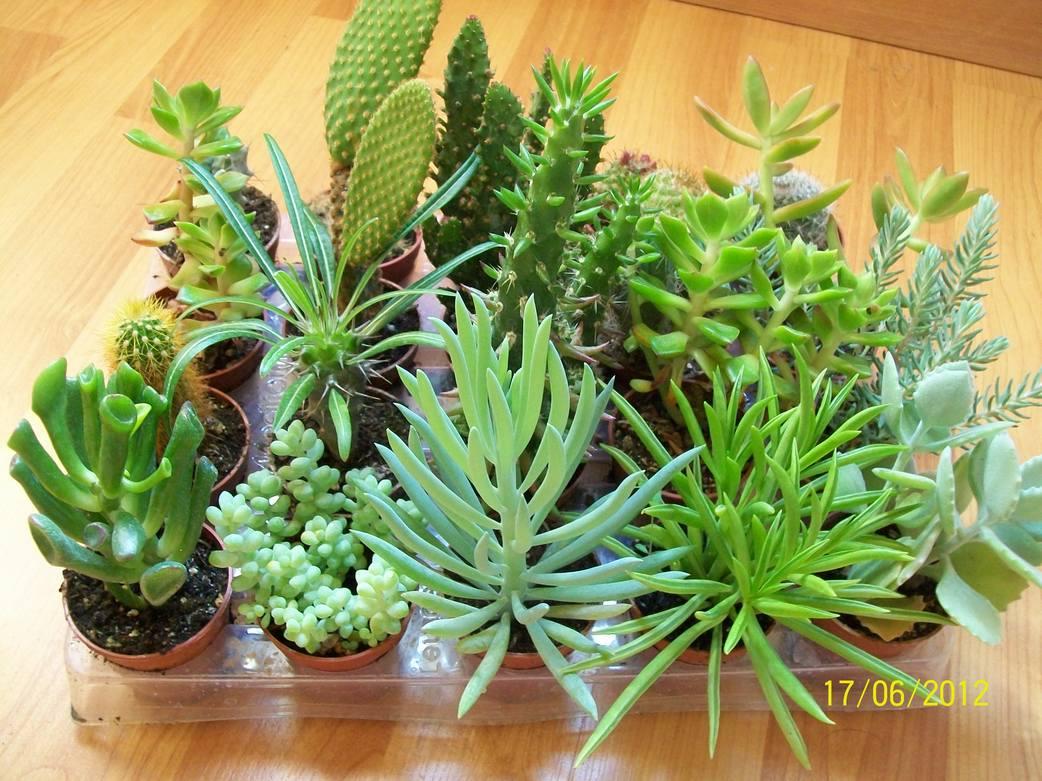 Unos cuantos cactus y otro tipo de plantas for Informacion sobre el cactus