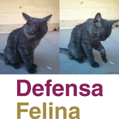 Regalo gato pelo largo madrid cupon westwing - Cupon westwing ...