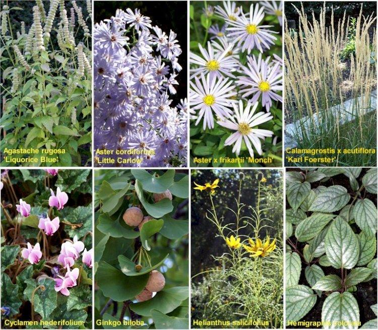 Fotos de plantas con sus nombres de vivero de murcia y - Viveros de murcia ...