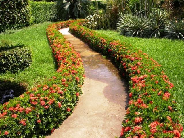 Foro de infojard n intercambiar plantas y semillas entre for Infos jardin