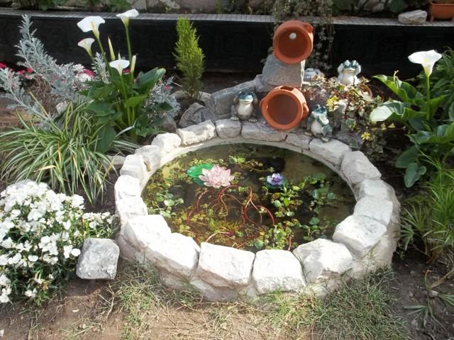 Fotos de las primeras flores de mi jard n for Imagenes de estanques caseros