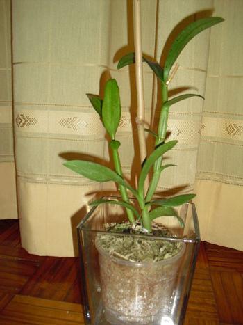 Duda con maceteros para orquis for Verdecora paterna